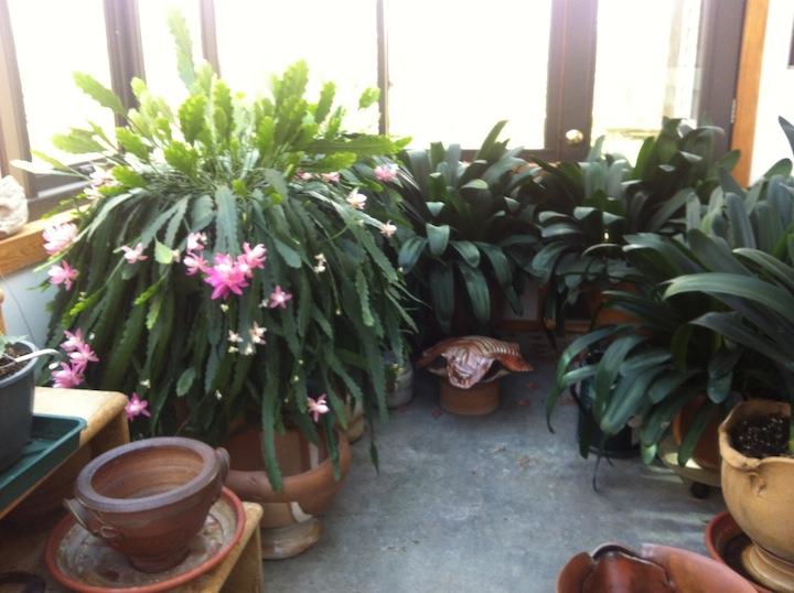 studio greenhouse